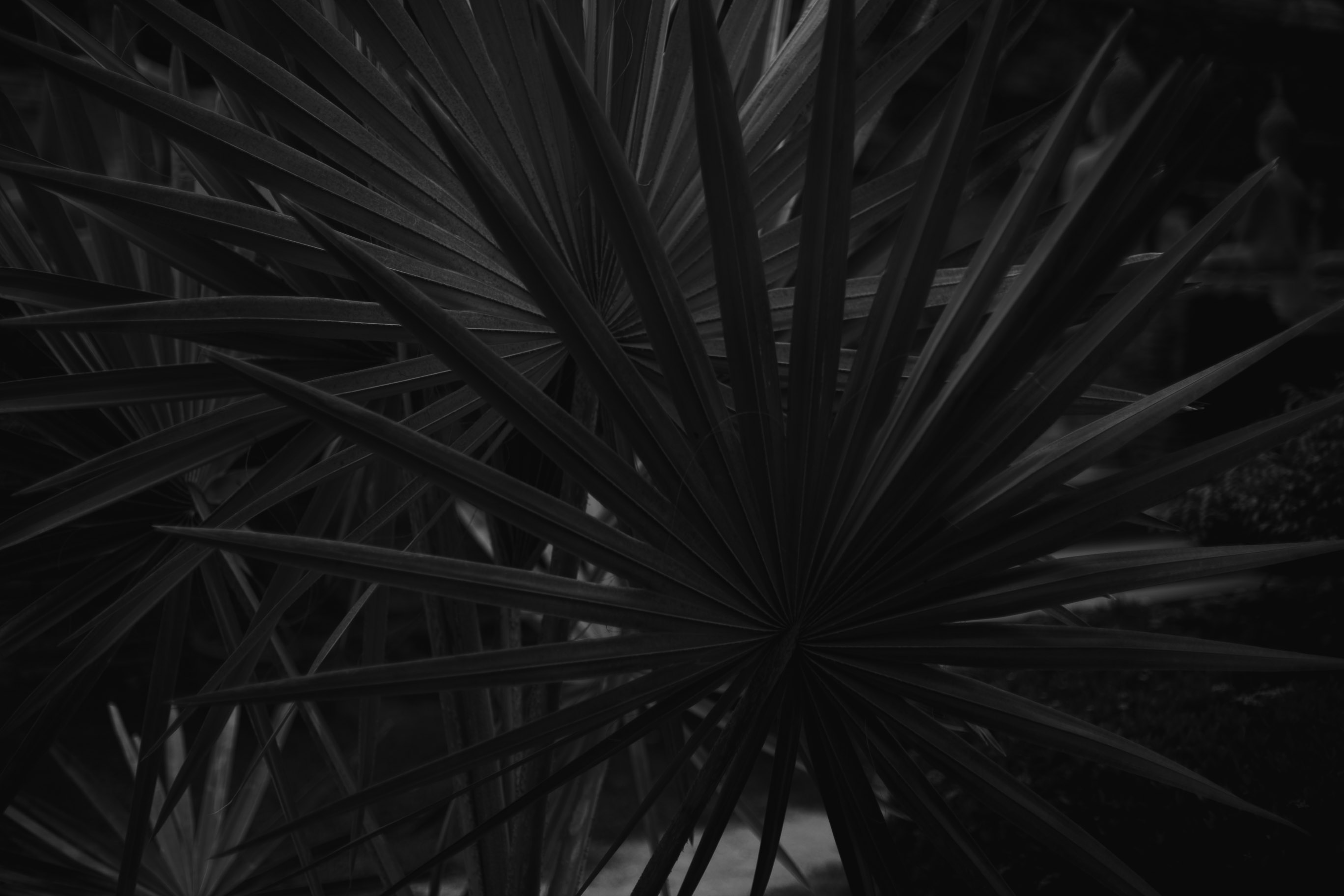 Black and white palm fronds outside a temple in Thailand